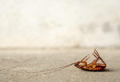 Dedetização de baratas - Inset Máxima