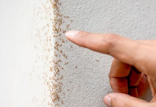 Dedetização de formigas - Inset Máxima