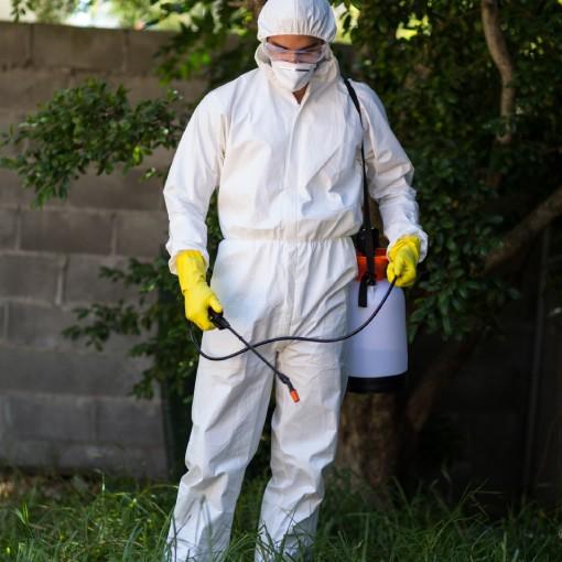 Serviço de dedetização de formigas- Inset Máxima