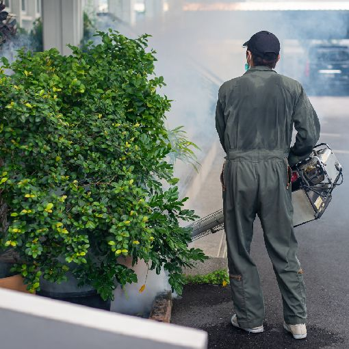 Serviço de dedetização de mosquitos - Inset Máxima