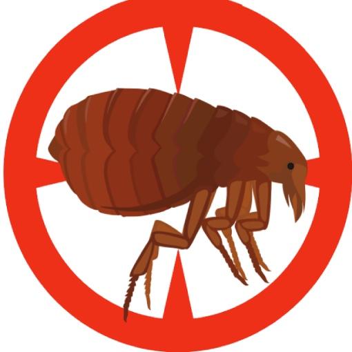 Serviço de dedetização de pulgas - Inset Máxima